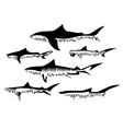 shark species vector image