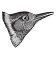 lewis woodpecker head vintage