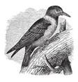 lewis woodpecker vintage