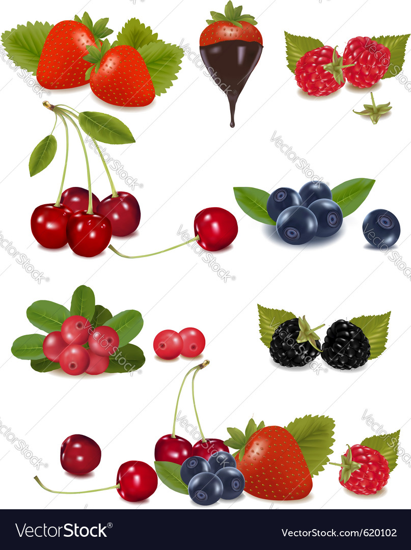 Berries and cherries vector