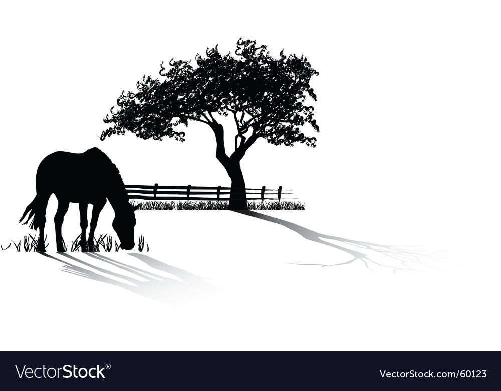 Horse grazing vector