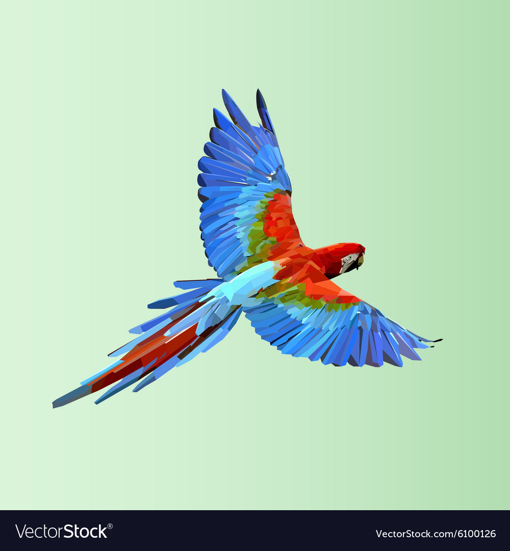 Flying parrot colorful vector