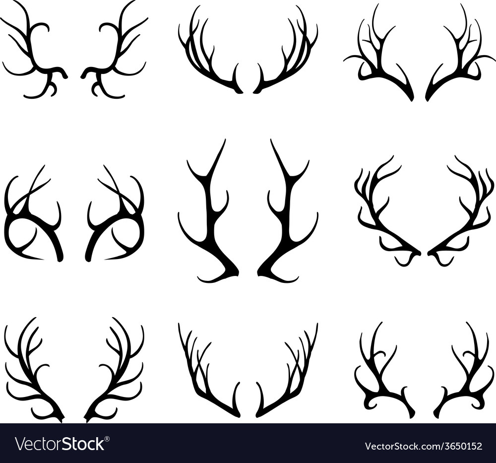 Deer antlers isolated on white vector