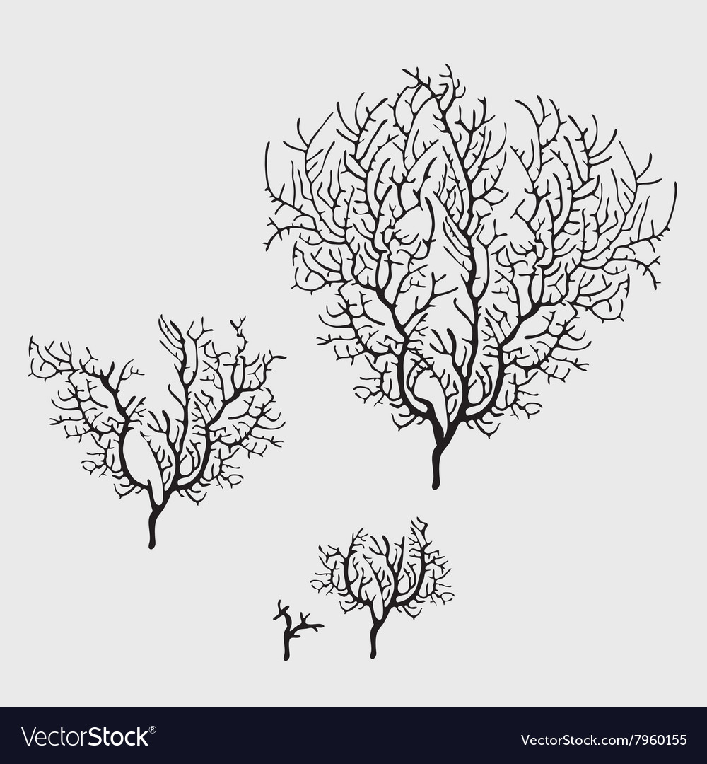 Branches of black coral stylish isolated image vector