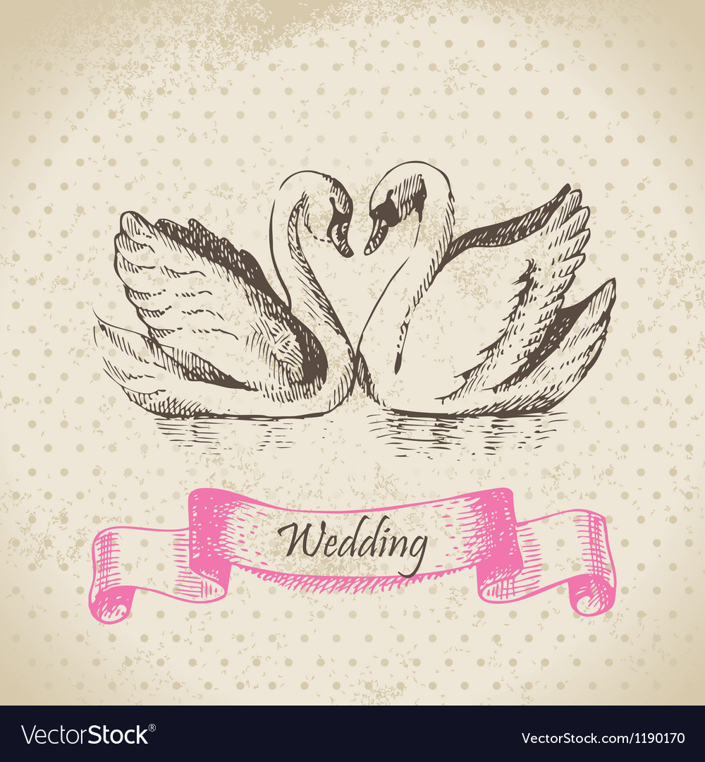 Swans wedding hand drawn vector