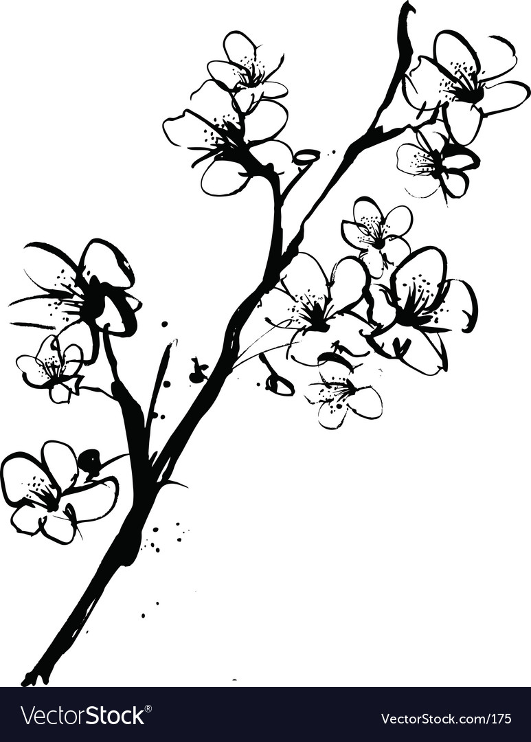 Cherry blossom ink vector