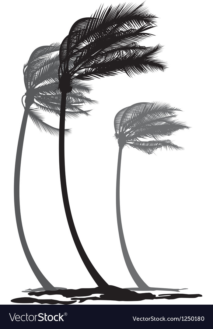 Palms in the wind vector
