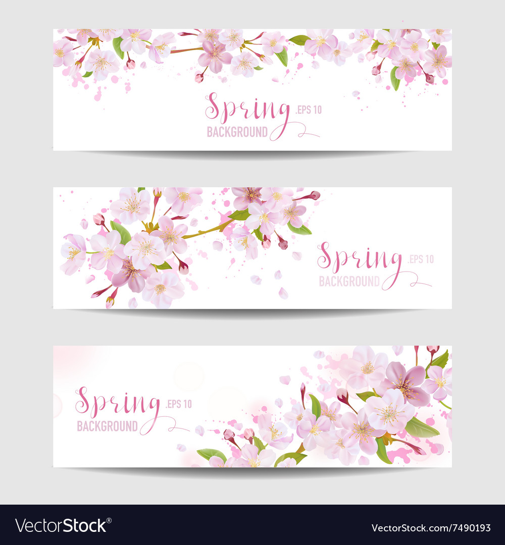 Spring flower banner set  cherry blossom tree vector