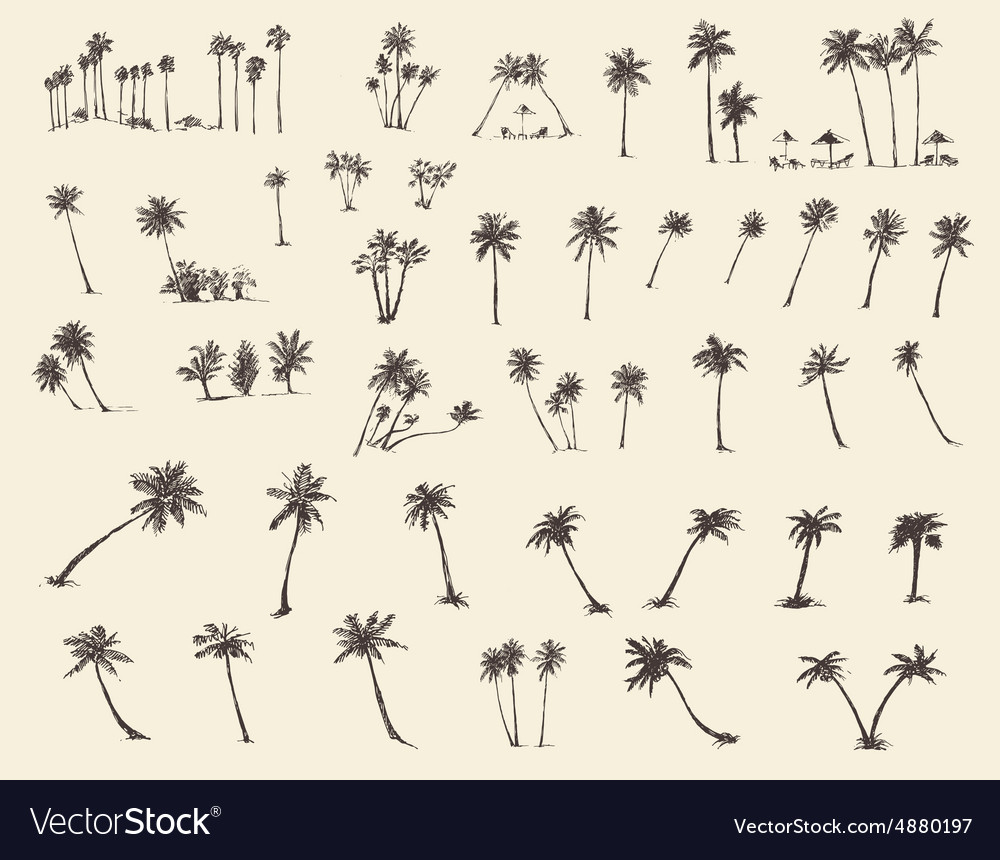 Silhouette palm trees sketch vector