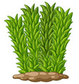 Tall grass on the ground vector image