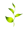 decorative ornament branch with green leaves tea vector image vector image