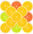 citrus background with slices vector image