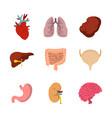 human internal organ icon set flat style vector image