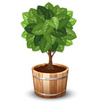 Tree tube vector image