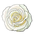 Deep white rose top view isolated sketch vector image vector image