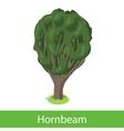 Hornbeam cartoon tree vector image
