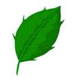 thistle leaf icon cartoon style vector image