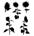 Collection of silhouettes of sunflowers vector image