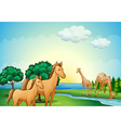 Horses and giraffe near the river vector image