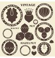 Nut Hazelnut Walnut vector image vector image