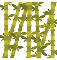 bamboo plant design vector image