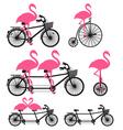 flamingos on bicycle set vector image