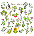 plants - nectar sources for honey bees vector image