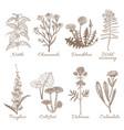 set of medicinal plants vector image