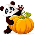 Harvest Panda vector image vector image