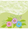 Floral Background Flowers Cosmos vector image vector image