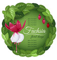 Fuchsia vector image vector image