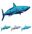 polygonal shark vector image
