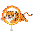 Cartoon tiger jumps through ring of fire vector image