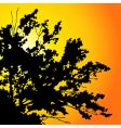 sunset tree vector image