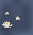 Three flowers of a lily in the lake on a blue vector image
