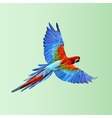 Flying parrot Colorful vector image