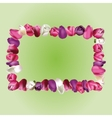 Frame with tulips vector image
