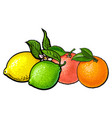 Whole shiny orange grapefruit lime and lemon vector image