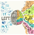 Brain hemispheres sketch vector image