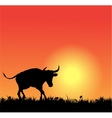 bull silhouette on sunset vector image