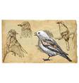 Animals theme SONGBIRDS vector image