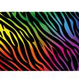 Rainbow zebra background vector image