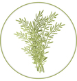 Rosemary Bunch vector image
