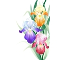 holidays card with Iris flowers bouquet vector image