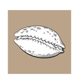white cowrie or cowry sea shell sketch style vector image