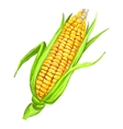 corncob hand drawn painted vector image