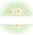 Greeting card with chamomiles and ladybug vector image