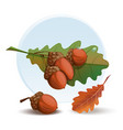 oak branch with acorns and leaves vector image