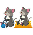 gray cats playing and sitting vector image