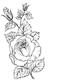 Black silhouette of rose vector image